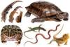 yakare - Reptilzer criador de reptiles
