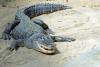 aranzazuss21 - Reptilzer criador de reptiles
