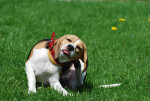 Perro  -  (Acaba de nacer)