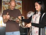 Serpiente bones -  Macho (2 años)