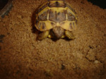 laly(décédée) - (3 meses)