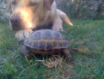 emir et ma tortue - Macho (2 meses)